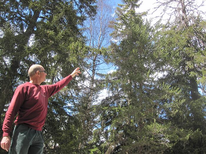 In den Schutzwäldern wird es brenzlig