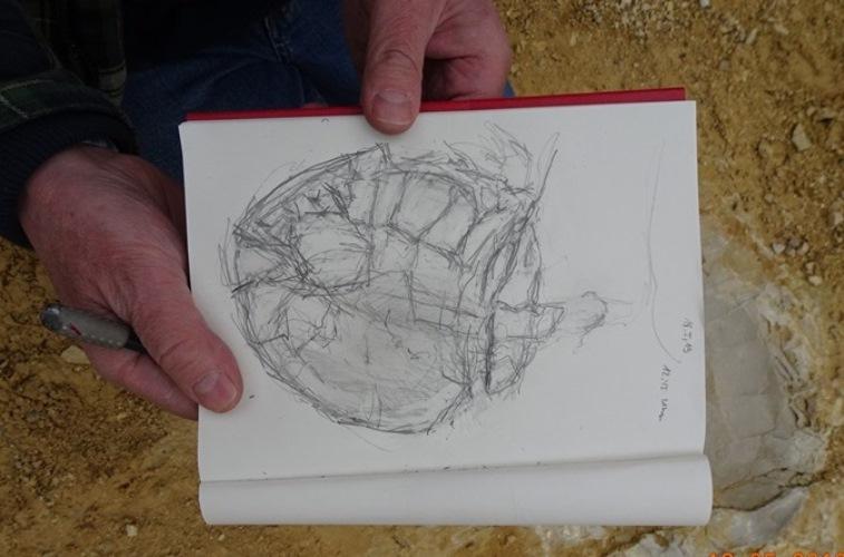 Eine schwierige fossile Schildkröte